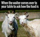 Funny Goat refrigerator magnet  3 x 3
