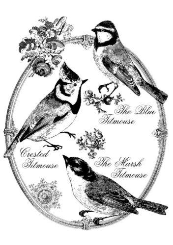 BÜGELBILD-Vintage-Shabby-Nostalgie-French-Vögel-Birds-3120