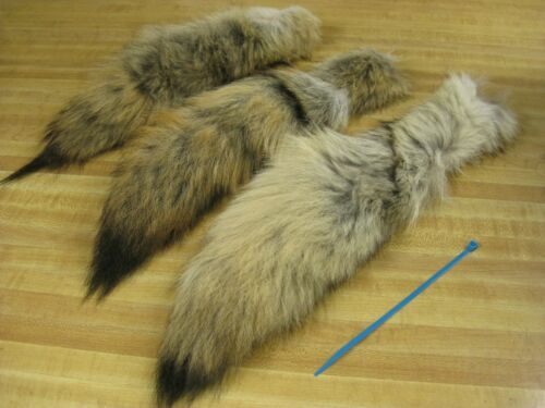 Tanned Coyote Tail # 1 Trapping Fur Coats Fur Craft Id Tag Blue