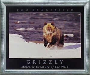 Grizzly-Bear-in-Snow-Animal-Wildlife-Wall-Decor-Silver-Picture-Framed-20x24