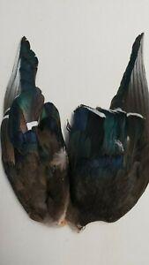 Pair-of-Wings-034-WOODDUCK-034-SALMON-FLIES-amp-STREAMERS-WET-FLIES