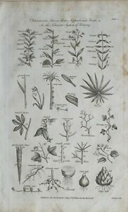 1788-DATED-PRINT-DETERMINATE-LEAVES-STEMS-SUPPORTS-ROOTS-LINNEAN-SYSTEM-BOTANY
