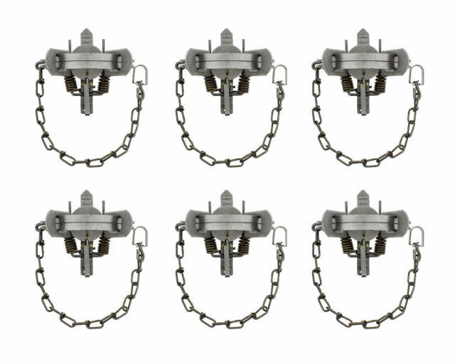 Excellent 6,Victor 1.5 coil spring traps muskrat 8-5 skunk mink coon Fox