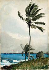 Winslow Homer Watercolor Reproductions: Palm Tree, Nassau: Fine Art Print