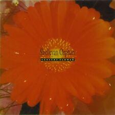 SHELLEYAN ORPHAN 'CENTURY FLOWER' UK LP