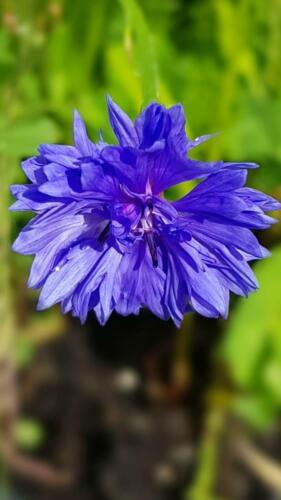 Matrimoni 4 fatto a mano Wildflower Seme BOMBE le Madri Giorno Feste Favore Eco Friendly