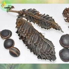 Semilla de MACUNA NEGRO mucuna seeds