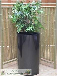 20m Wurzelsperre 2mm Pe Hohe 100cm Rhizomsperre Bambussperre Bambus