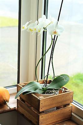 6x GEFLAMMTE kleine KISTEN Pflanzkasten Blumentopf Pflanztrog Pflanzkübe 6er SET