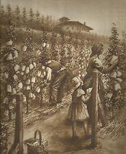 K0261 Famigliuola insacchetta la frutta nei campi - Stampa antica