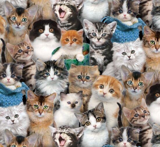 Fat Quarter Cat Breeds Cats Cotton Quilting Fabric Elizabeth's Studio 3809 Multi