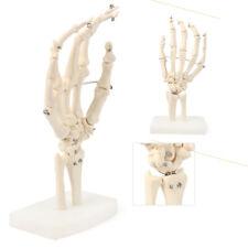 Life Size Human Skeleton Hand Joint Anatomical Model Study Teach Medical Model