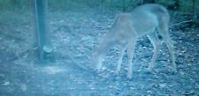 Tube Game Feeder for Deer hog squirrel hunting trail camera corn waterproof camo