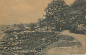 PC40014 Tea Estate. Nuwara Eliya. Ceylon. John. B. Hopkins