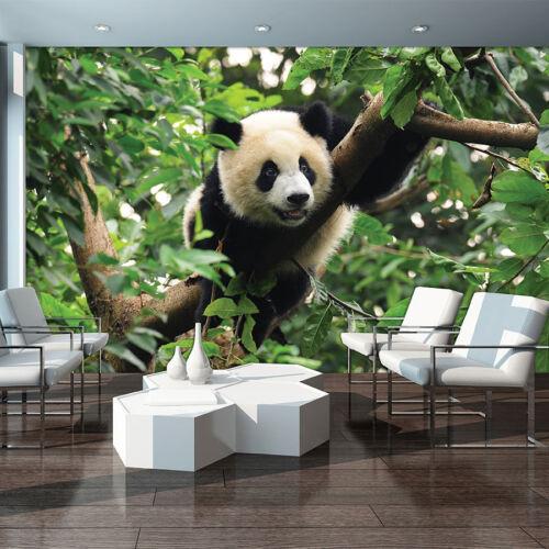 Poster la fresque papier peint papier peint photo jungle panda ANIMAL OURS 3fx3398p4