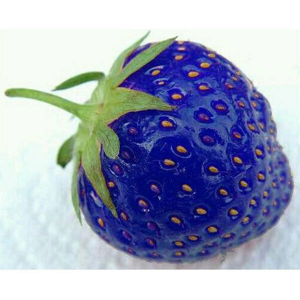 100PCS Natural Blue Strawberry Seeds Nutritious Delicious Vegetables Berry Seed
