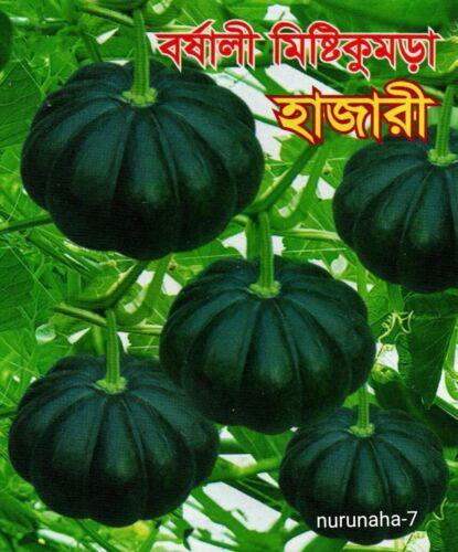 Sofry Kodu বষালী মিষ্ঠি কুমড়া। আউশি কদু Sweet Pumpkin Kumra Bangladeshi Seeds