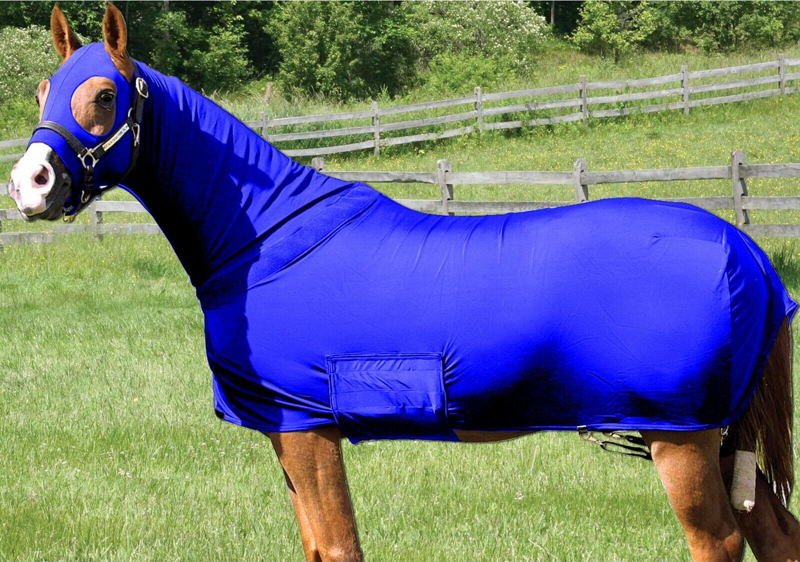 Horse Sleazy  Full Body Sheet   Blanket W  Full Separating Zip MEDIUM   R. blueE  select from the newest brands like