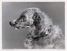 "Pleasing 1800s Edwin Landseer Antique Engraving ""Hafed the Deerhound"" Signed Coa"