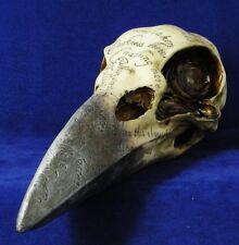 Raven Skull Edgars Inscribed Crow Head Gothic Statue Figurine Ornament Figure