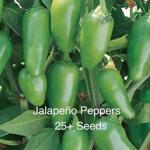 Jalapeño Pepper Seeds Organic Qty 25+ Seeds Free Ship From California
