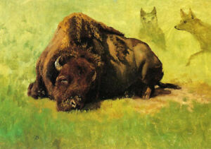 Bison-With-Coyotes-In-The-Background-by-Albert-Bierstadt-Painting-Reproduction