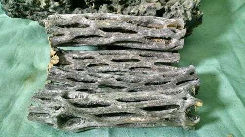 4 Pieces 4 INCH  Cholla Wood Cactus Organic Fish Reptiles Crabs Birds