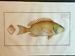 1st-EDITION-BLOCH-OBLONG-FOLIO-H-C-RARE-FISH-SEA-ROUGH-268