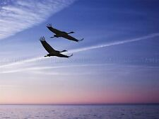 FLYING SWANS SILHOUETTE SUNSET PHOTO ART PRINT POSTER PICTURE BMP934A