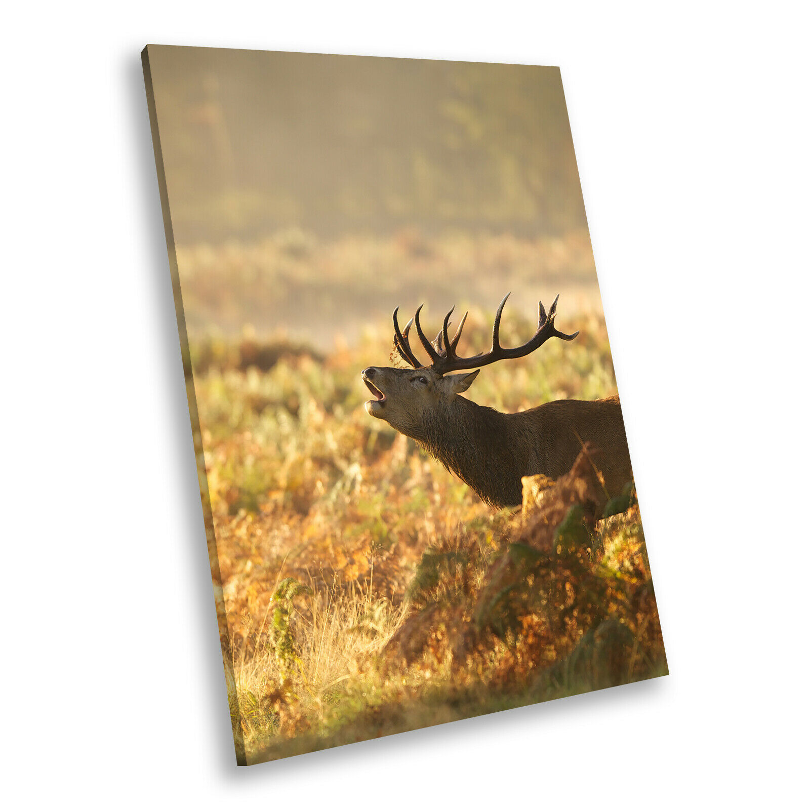 braun Stag Grass Gelb Portrait Animal Canvas Wall Art Large Picture Prints