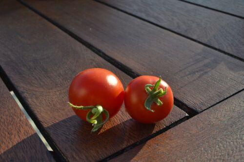 20 Graines seeds de tomate bloody butcher Bio