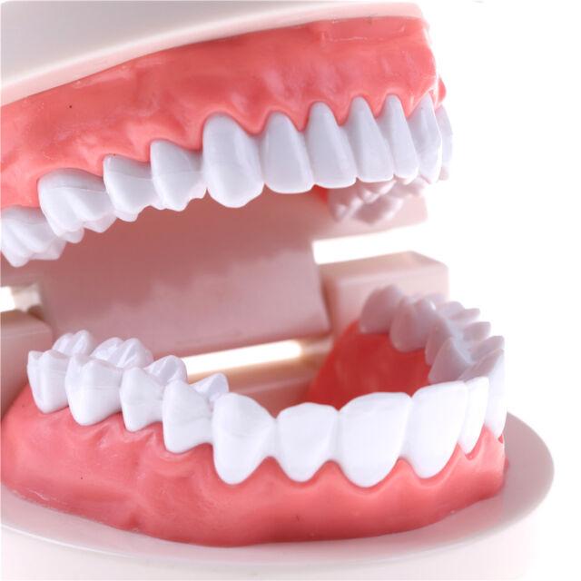 Children Education oral teeth toy Dental tooth model Early  teaching model/_NSNV