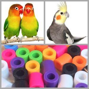 Details about 20Pcs Bird Leg Bands Cockatiel Love Bird Medium Size Birds  High Quality 5mm New