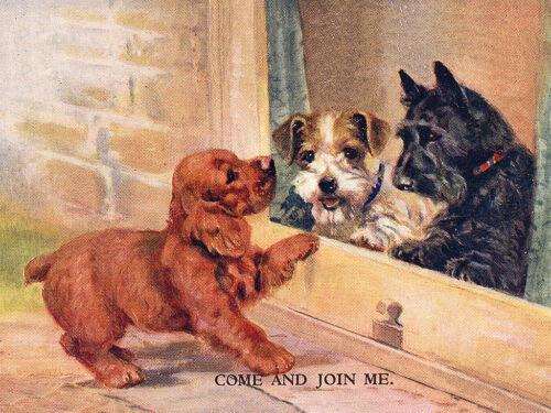 COCKER SPANIEL SCOTTIE /& SEALYHAM TERRIER CHARMING DOG GREETINGS NOTE CARD