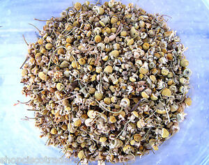 Egyptian-Chamomile-Whole-Flowers-4OZ-B005-Relaxation-Herb-Cure-Good-Luck-Money