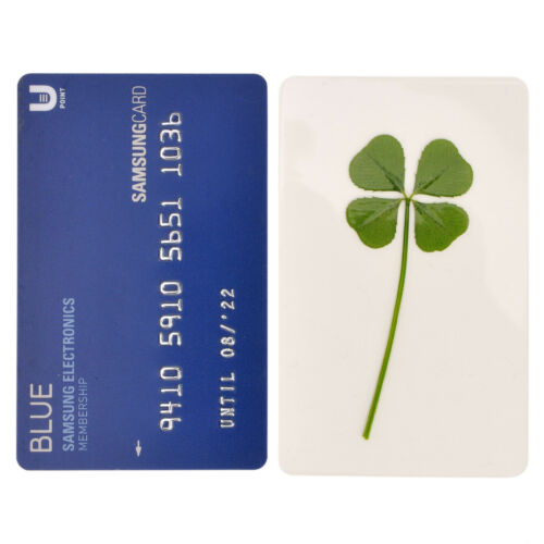 Real 4 Four Leaf Clover Irish Good Luck Charms Lucky Amulet Fortune Coated Large