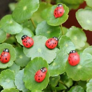 100X-Mini-Self-Adhesive-Wooden-Ladybird-Stick-On-Wood-Lady-Bug-Craft-Card-BIN-F