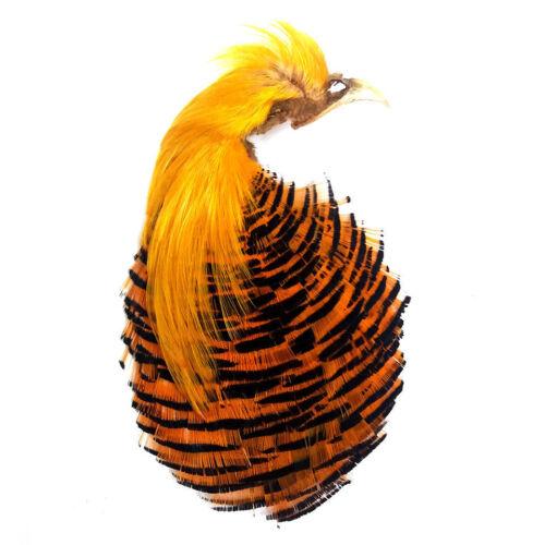 Gordon Griffiths Golden Pheasant Head Complete Grade 2 GPH2