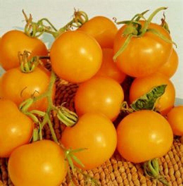 Tomato Golden Sunrise 25 seeds