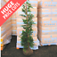 Various Sizes Available ROOTBALL Green Leylandii Hedging Conifers