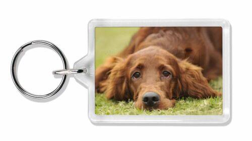 Irish Red Setter Puppy Dog Photo Keyring Animal Gift, AD-RS2K