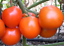 Deutscher-Fleiss-Tomato-Nice-Sweet-Flavoured-German-Variety-Australian-Grown