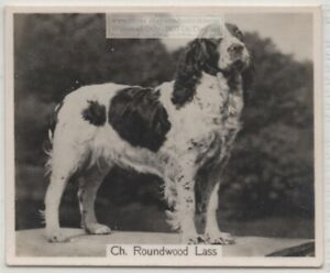 English-Springer-Spaniel-1930s-Champion-Dog-Breed-Canine-Pet-Ad-Trade-Card