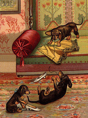 Dachshund Charming Dog Greetings Note Card Cute Dogs Play With Ladies Corset Ebay