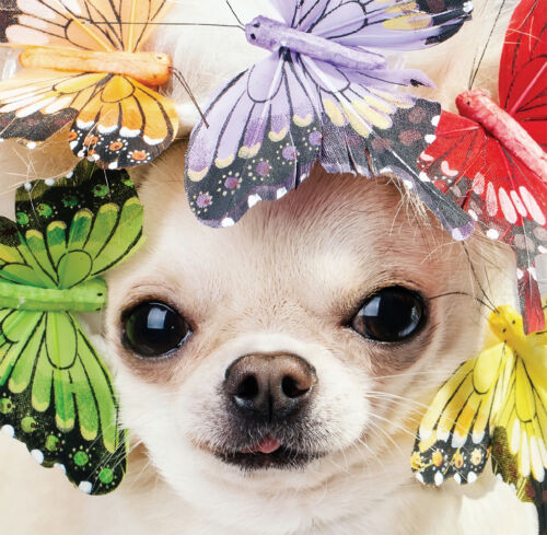 White Chihuahua Dog Pretty Butterfly design /& Freepost Mother/'s Day Blank Card