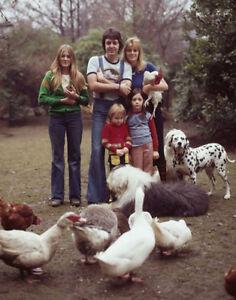 "The Beatles Paul McCartney April 4, 1976 14 x 11"" Photo"