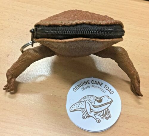 Stunning Cane Toad Skin full body  Zip Up Coin Purse Australian made Rare Exotic