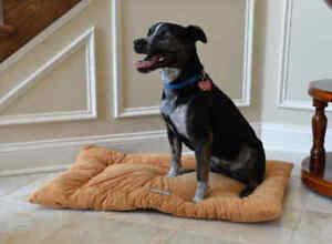 Armarkat-Soft-Brown-Velvet-Dog-Pet-Bed-Mat-Washable-LARGE