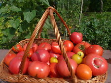 Bulgarische Tomatenmix Überraschungspackung, Saatgut 30 +Stück Samen