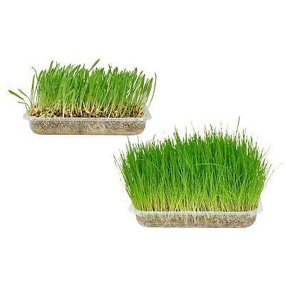 Karlie Katzengras Herba soft Katze Verdauungshilfe Haarballen Gras Cat Verdauung